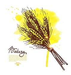 Watercolor wheat sketch background vector