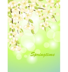 springtime vector image