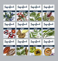 superfood banners set realistic color vector image vector image