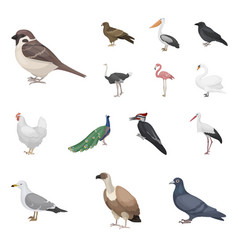 Types of birds cartoon icons in set collection for vector