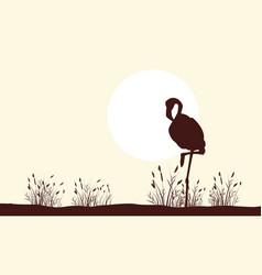 Flamingo beauty landscape silhouettes collection vector