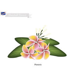 plumeria the national flower vector image vector image