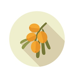 Branch of sea-buckthorn berries flat icon berry vector