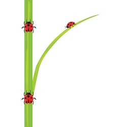 Ladybird on the green grass vector