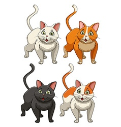 Yong cats in four colours vector