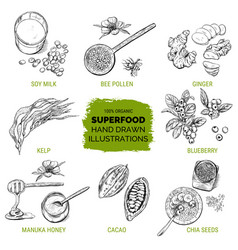Superfood hand drawn sketch vector
