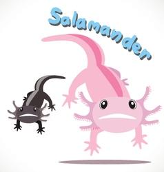 Salamander 5 vector image vector image