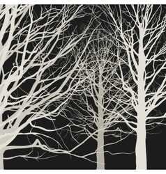 Trees on black background vector image