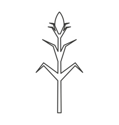 Corn plant isolated icon vector