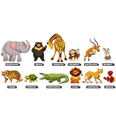 Wild animals in many types vector