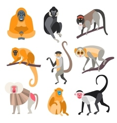 Set of primates and monkeys vector