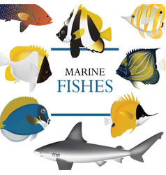 Tropical fish collection marine vector
