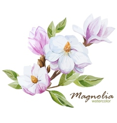 Magnolia set vector image