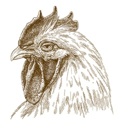 Engraving rooster head vector