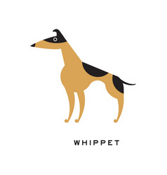 Black and brown whippet character isolated on vector