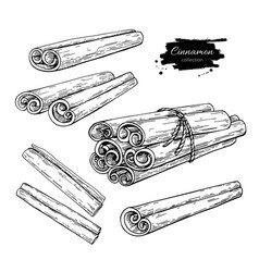 Cinnamon stick and tied bunch set drawing vector