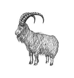 Goat with big hornes vector
