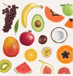 Jaw dropping hand drawn summer fruits vector