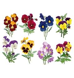 Set of multicolored pansies vector
