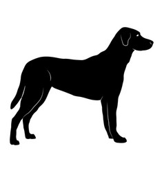 Silhouette of a standing dog with body details vector