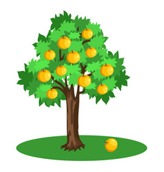 Apple tree with green leaves and yellow fruits vector