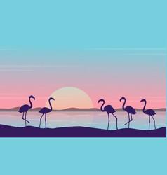 At sunrise flamingo scenery silhouettes vector