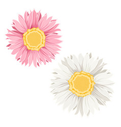 yellow pink flowers vector image vector image