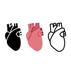 real human heart in flat style vector image