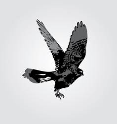 Hawk silhouette vector