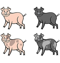 Color pig vector