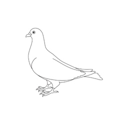 Beautiful silhouette of a dove vector