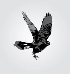 hawk silhouette vector image