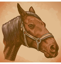 Engraving horse head retro vector