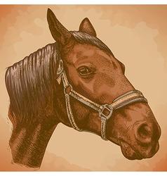 engraving horse head retro vector image