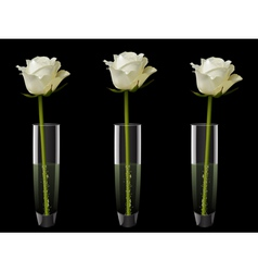 white roses in vases vector image vector image