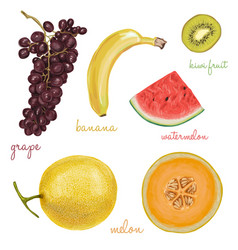 Exotic juicy delicious fruits vector