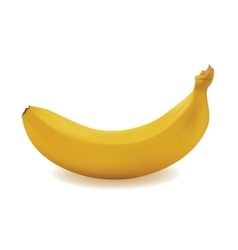 Yellow ripe banana vector