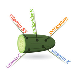 Cucumber content properties and benefits vector