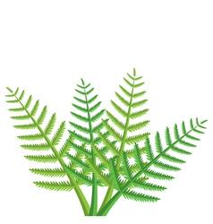Green fern leaves vector