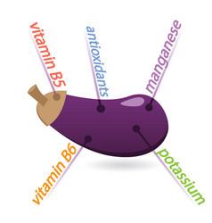 Eggplant content properties and benefits vector
