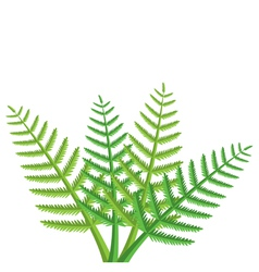 Green fern leaves vector
