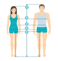 Human body measurements and proportions vector