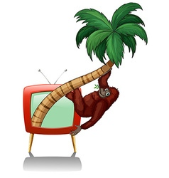 Television screen with urangutan on the tree vector image vector image
