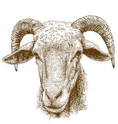 Engraving rams head vector