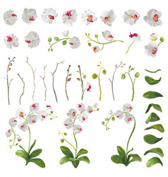 orchid tropical flowers floral elements vector image vector image