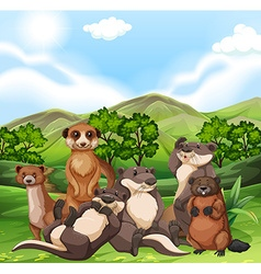 Otters and beavers in the field vector