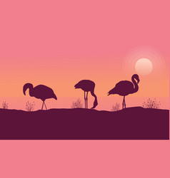 Scene flamingo at sunrise collection vector