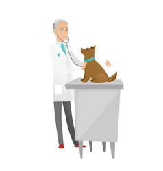 Senior caucasian veterinarian examining dog vector