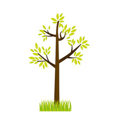 Colorful silhouette tree leafy with bush vector