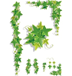 Ivy decorations vector image